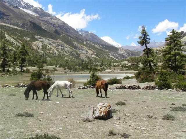 Annapurna trekking between Pisang and Manang